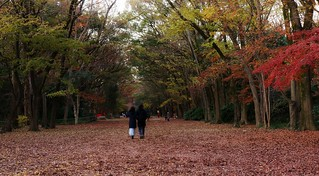 Early Winter /  Kyoto  Tadasu-no-mori Forest