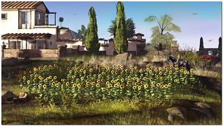 Sunflower Field_2017-12-02_009