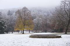 Heidelberg Schlosspark / ハイデルベルク城の公園 (Patrick Vierthaler) Tags: ハイデルベルク お城 ドイツ 世界遺産 heidelberg schloss castle germany deutschland winter 冬 雪 snow autumn foliage ginkgo 銀杏 紅葉