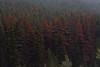 Fall Trees (Lauren Eve Photography) Tags: wildlifephotography albertaphotography banffphotography peytolake emeraldlake abrahamlake lindalake lakeohara vermilionlake banffalberta wolfphoto wolf fox bear grizzly elk deer animalphotos lakereflections jasperalberta bowriver bowvalleyphotography landscapephotography canadianlakes rockymountains canadianrockies lensball canoephoto supermoon washingtondc roadphoto tentphoto campingphoto