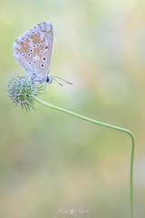 simple (Javy Nájera) Tags: larioja campo flor macro mariposa naturaleza paisaje planta javynájera aproximación simple flower beautiful butterfly nature landscape plant approach