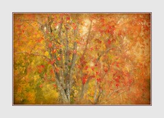 Autumn Leaves (Christina's World-) Tags: autumn leaves foliage nature trees painterly frame red yellow orange colorful textures stilllife california december sandiego usa impressionism