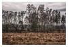 Unland (bavare51) Tags: usedom landscape baumgruppe feuchtwiesen achterwasser büsche landschaft