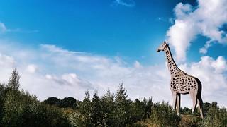 De Giraf bei Emmen Holland