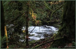 Gowlland Tod Provincial Park creek