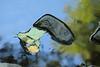Gales Creek (Tony Pulokas) Tags: galescreek oregon summer creek stream forest reflection rock blur bokeh caddisfly leaf alder