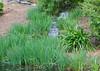 Long Exposure waterfall (JiminSC) Tags: waterfall longexposure grass greengrass water