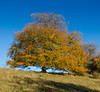 Hilltop (Jim Waldron) Tags: westonbirt autumn arboretum