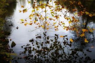 smooth pond... 🍂🍁 Autumn Morning