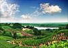 Vineyards (Katarina 2353) Tags: landscape vineyard summer serbia srbija donau dunav katarina2353 katarinastefanovic