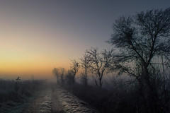 Frozen Eifel Sunrise (Netsrak) Tags: baum dezember eu eifel europa europe herbst landschaft morgen natur nebel sonne sonnenaufgang autumn december fall fog landscape mist morning nature sun sunrise tree trees