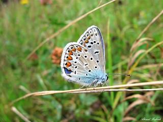Butterfly 1503