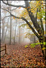Autumn Trail. (BamaWester) Tags: montesano montesanostatepark autumn alabama fall foggy fog forest fence leaves napg nature huntsville bamawester