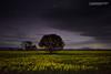 Canola at Dawn (cameron_sweeney) Tags: 28mm au aus australia australian grampiansnationalpark kfconcept landscape minolta minoltamdrokkor28mmf28 photography sony sonya7r thegrampians vic victoria a7r f28 wwwcameronsweeneycomau dunkeld