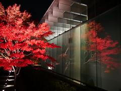 Reflection (yukky89_yamashita) Tags: 平等院 京都 宇治市 kyoto uji japan autumn leaves reflection night red 紅葉