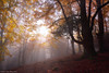 Lights of Autumn (Hector Prada) Tags: bosque otoño niebla bruma luz sol árbol contraluz hojas encantado mágico forest autumn fog mist light backlight sun morning tree leaves enlightened enchanted dreamy paísvasco basquecountry