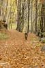 Passeggiare insieme. (°Valse°) Tags: seleziona cane dog dogs pastore pastoretedesco germansheperd germanshepherd montagna toscana pievepelago abetone italia italy autunno autunnali autumn colori sguardo occhi cani cooper sigma nikon nikond7000 nikonphoto