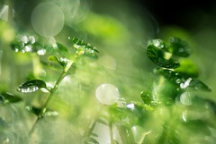 Green dream (m@t.) Tags: macroorcloseup macro 7dwf bokeh tamron90 flickrfriday gogreen semettreauvert nature plant green mt a6000 sony ilce6000