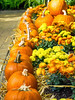 Pumpkins (jameslf) Tags: berkshire flowers greatpark plants savillgardens surrey virginiawater windsor