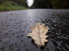 Facing the future (borneirana) Tags: invierno winter otoño autumm morriña rain rainy hojas gotas lluvia leaf drops way landwirtschaft landscapes