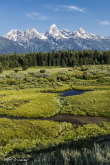 Blacktail Ponds Overlook_27A0267 (Alfred J. Lockwood Photography) Tags: alfredjlockwood nature landscape blacktailponds overlook snakeriver rockymountains grandteton middleteton teewinot grandtetonnationalpark valley forest summer morning wyoming