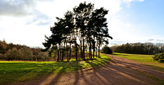 THE TREES (chris .p) Tags: clent nikon d610 view trees worcestershire england winter 2017 nt nationaltrust walk uk december westmidlands