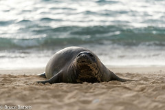 171206 Honolulu-16.jpg (Bruce Batten) Tags: mammals locations wild northpacificocean trips occasions oceansbeaches subjects reflections usa animals vertebrates businessresearchtrips marine hawaii honolulu unitedstates us