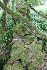 IMG_3157 (avsfan1321) Tags: connemaranationalpark connemara nationalpark ireland countygalway green lush landscape plants moss