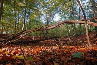 Farbe im Wald