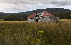 Letting Go (Keith Midson) Tags: brunyisland shed barn decay rural australia tasmania field flower grass building abandoned