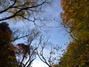 17o4801 (kimagurenote) Tags: 都民の森 forestoftokyocitizen 紅葉 autumn colored leaves ブナ fagus faguscrenata 東京都檜原村 hinoharatokyo 森 forest