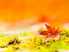 苔のむすまで・・・ (Tomo M) Tags: autumncolors 紅葉 leaf japanesemaple maple autumn 那谷寺 japan temple momiji moss bokeh rain red orange green garden