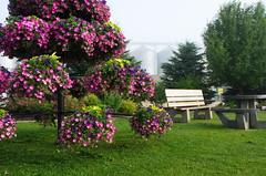 Westlock Town Bench (pokoroto) Tags: westlock town bench アルバータ州 alberta canada カナダ 8月 八月 葉月 hachigatsu hazuki leafmonth 2017 平成29年 summer august