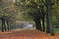 Autumn morning (natureloving) Tags: autumn fall november nature trees automne landscape natureloving nikon d90 nikonafsdxnikkor18300mmf3563gedvr