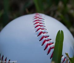 America's Game - HMM (11Jewels) Tags: canon tamronsp90mmf28divcusd baseball game macromonday memberschoice gamesandgamepieces ball