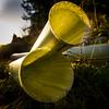 strange music from these horns! (grahamrobb888) Tags: nikon nikond800 nikkor nikkor20mmf18 strange surreal horns backlit forest forestry