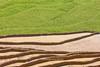 File569.0617.Dế Su Phình.Mù Cang Chải.Yên Bái. (hoanglongphoto) Tags: asia asian vietnam northvietnam northwestvietnam landscape scenery vietnamlandscape vietnamscenery terraces terracedfields transplantingseason sowingseeds hillside people canon canoneos1dsmarkiii hdr tâybắc yênbái mùcangchải phongcảnh ruộngbậcthang ruộngbậcthangmùcangchải mùacấy đổnước người sườnđồi mùcangchảimùacấy canonef70200mmf28lisiiusm ricceterracedinvietnam terracedfieldsinvietnam dếsuphình