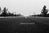 (owain_e) Tags: filmphotography road concrete roadtrip america oregon blackandwhite monochrome filmsnotdead