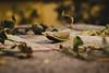 (Shona T) Tags: autumn florence italy secretgarden moody garden seedpod dof nature decaying
