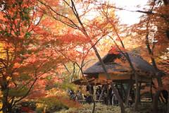 六義園 02 (sunuq) Tags: tokyo japan 日本 東京 canon eos 5dsr ペッツバール ロモグラフィ lomography zenit petzval 六義園 紅葉 橋 rikugien