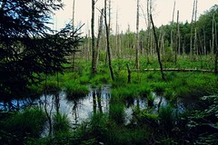 Buddenhagener Moor | Buddenhagen Bog (André-DD) Tags: baum bäume tree trees buddenhagen deutschland germany mecklenburgvorpommern mecklenburgwestpomerania outdoor sky moor bog wasser water wald forest