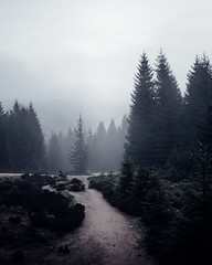Aufbruch (Gruenewiese86) Tags: 2017 brocken harz nebel wald instameet imharz imharz17 brockentour natur nature tree trees travel instakwer
