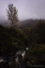 Buscando a Harry Potter. (Antonio Puche) Tags: antoniopuche escocia scotland glenfinnanviaduct glenfinnan viaduct tren harrypotter nikon nikon173528 viaducto paisaje landscape lluvia rain
