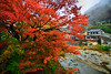 炸紅(DSC_7230) (nans0410(busy)) Tags: japan yamagata scenery river redleaves maple autumn 日本 山形縣 山寺 山寺駅 立石寺 紅葉 秋天 楓葉 mountaintemple yamadera