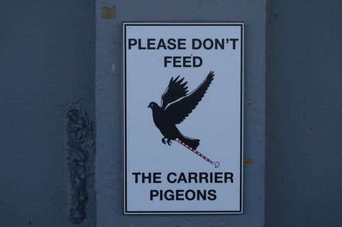 "Please don't feed the carrier pidgeons • <a style=""font-size:0.8em;"" href=""http://www.flickr.com/photos/28558260@N04/38341131602/"" target=""_blank"">View on Flickr</a>"