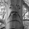 Grumpy Tree (Rich Lukey) Tags: tree abstract texture mono monochrome blackandwhite nikon d7100 50mm face expression sad miserable grumpy bark beech