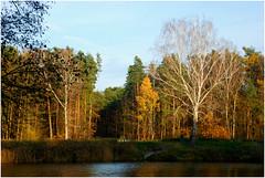 DSC_1958 (FMAG) Tags: 2017 żabieniec zalesie jesien