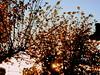 Tree (ashera08) Tags: ashera tree portugal paisagens picasa photos paintings picture nature