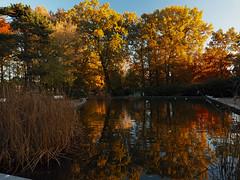 Autumn color rush (Ostseeleuchte) Tags: herbstfarbenrausch autumncolorrush fallcolors park balticsea timmendorferstrand imherbst abendlicht eveninglight goldenlight