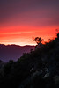 Topanga State Park - California (ChrisGoldNY) Tags: chrisgoldphoto chrisgoldny chrisgoldberg forsale licensing bookcovers bookcover albumcover albumcovers sonyalpha sonya7rii sonyimages sony red rouge losangeles california socal californian la colors colours colorful colourful psychedelic dusk magichour